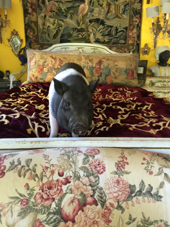 PIGGY in THE BED